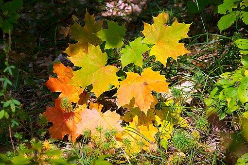 Leaves, Colorful, Fall Foliage, Lichtspiel, Autumn Mood