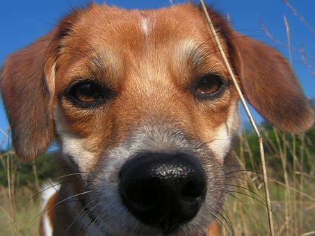Dog, łep, The Nose