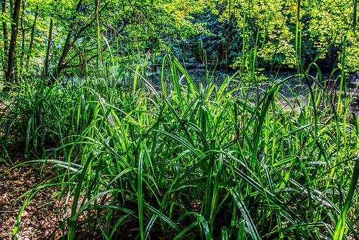 Forest, Grass, Grasses, Bush, Shrubs, Green, Water