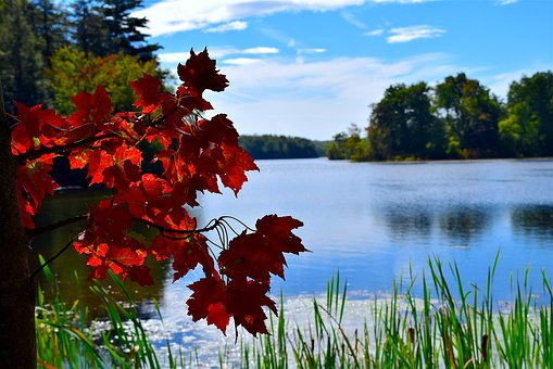 Leaves, Red, Park, Autumn, Nature, Grass, Lake, Trees
