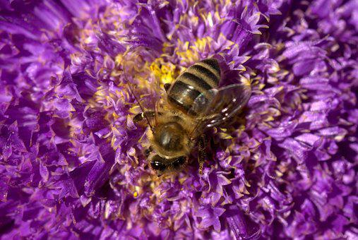 Bee, Pollination, Flower, Mov, Insecta, Nature