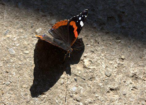 Butterfly, Red, Black, Wings, Nice, Shadow, Silhouette