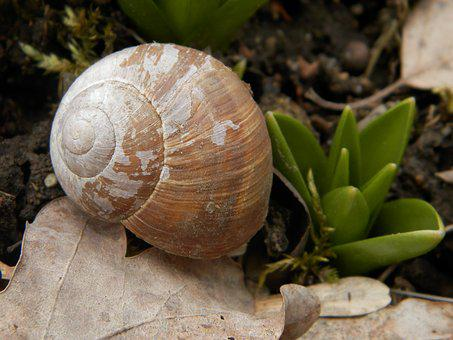 Nature, Snail, Shell
