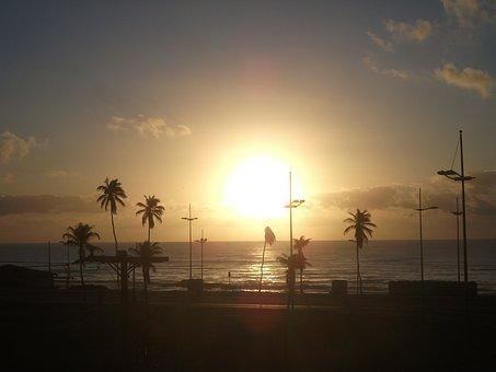 Salvador, Bahia, Beach, Sunset, Heights, Coconut Trees