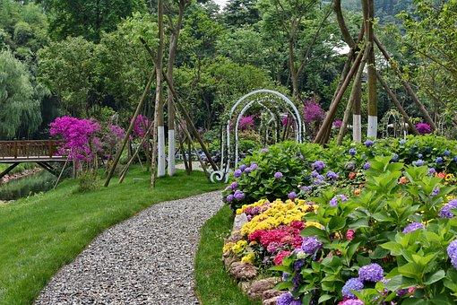 Flowers, Hydrangea, Trail