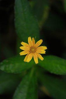 Yellow, Yellow Flower, Flower, Nature, Yellow Flowers