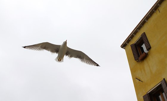 Ave, Nature, Europe, Italy, Bird, Sky, Freedom, Seagull