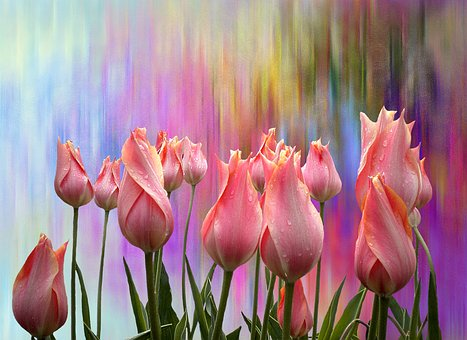 Tulips, Spring, Nature, Time Of Year, Easter, Plant