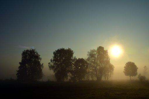 Fog, Landscape, Nature, Morning Mist, Morgenstimmung