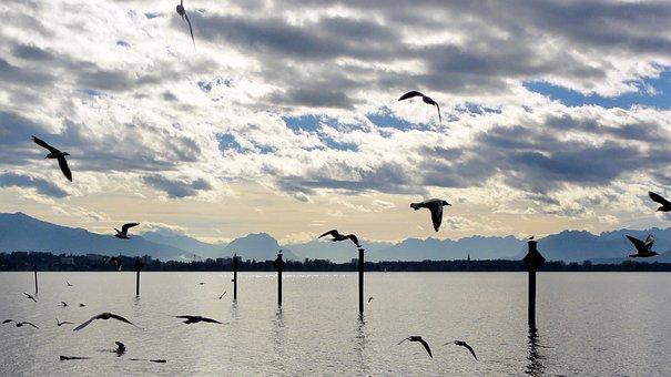 Lake Constance, Lake, Abendstimmung, Evening, Gulls