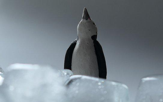 Ice, Penguin, Cold, Animal, Water, South Pole