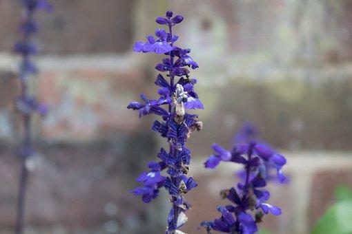 Lavender, Purple Flowers, Bloom, Summer, Perfume