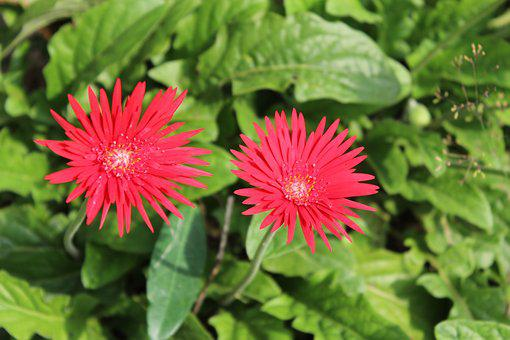 Flowers, Red, Summer, Colorful, Nature, Red Flowers