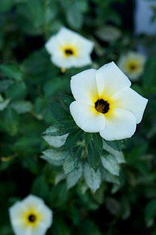 White Flower, Flower, Tranquility, Flowers, Spring