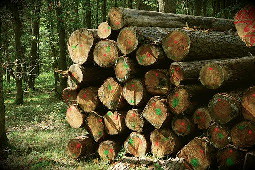 Holzstapel, Forest, Tree Trunks, Wood, Stack, Forestry