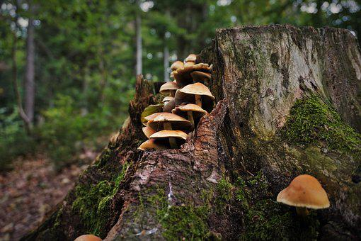 Mushrooms, Forest, Nature, Autumn, Tree Fungus