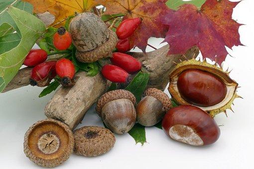 Autumn, Chestnut, Acorns, Rose Hip, Fruits