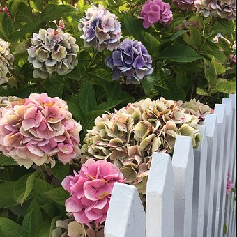 Flowers, Picket Fence, Hydrangea, Have
