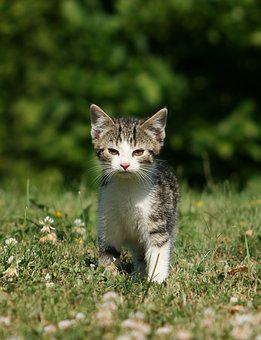 Cat, Cat Baby, Young Cat, Domestic Cat, Grass, Kitten