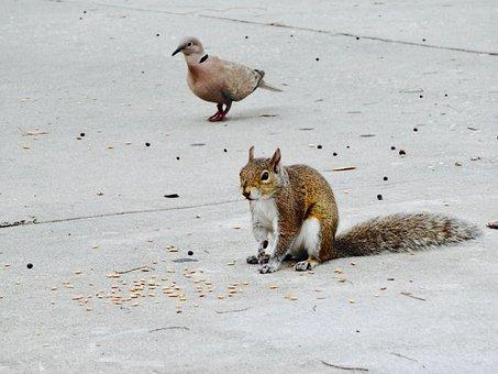 Squirrel, Rodent, Animal, Wildlife, Mammal, Cute, Fur