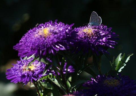 Butterfly, Blue, Bull's Eye, Flower, Mov, Plant