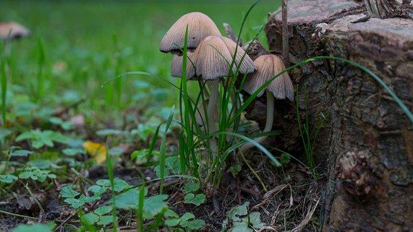Mushrooms, Autumn, Forest, Nature, Mushroom Picking