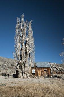 Nature, Tree, Old Tree, California, Log Cabin, Old