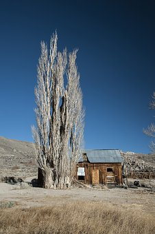 Nature, Tree, Old Tree, California, Log Cabin, Old