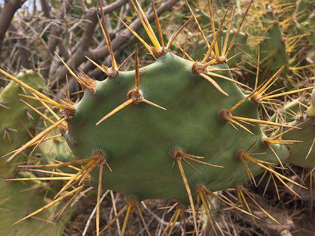 Cactus, Green, Thorns, Prickly, Nature, Plant, Botany