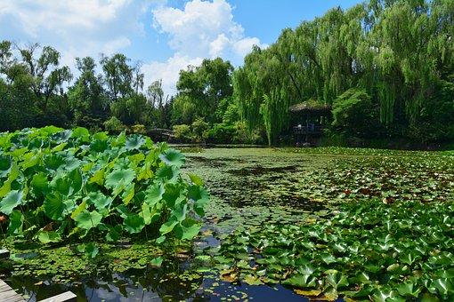 Pond, Republic Of Korea, Flowers, Sunshine