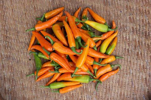 Chilli, Yellow, Agriculture, Rai, Farm, Thailand