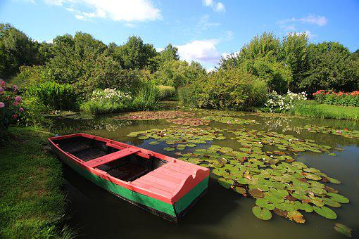 Pond, Water Lilies, Flower, Aquatic Plant, Nature