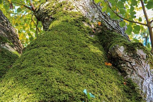 Tree, Autumn, Moss, Leaves, Autumn Colours, Landscape