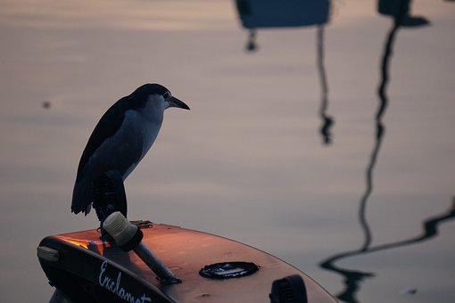 Bird, Animal, River, Water, Shadow, Boat, Looking