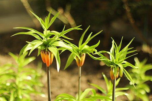 Nature, Dawn, Sunny, Light, Plant, Green Leaf
