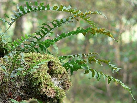 Fern, Moss, Log