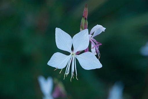 Flower, Grasses, Blossom, Bloom, Meadow, Bloom, White