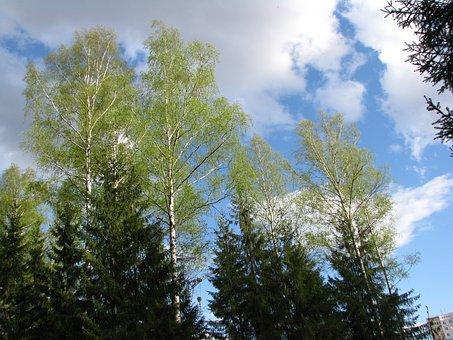 Spring, Blue Sky, Clouds, Landscape, Forest, Sun