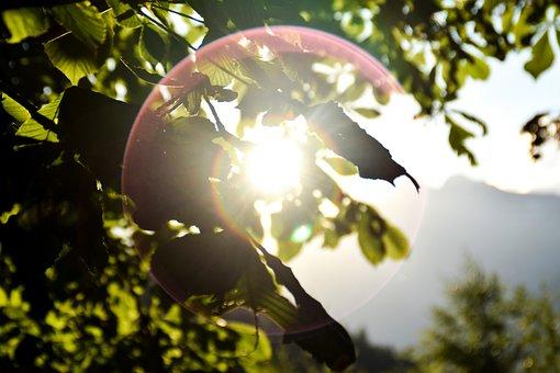 Sun, Seem, Sunshine, Nature, Light, Rays, Mood