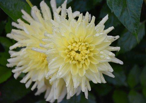 Flowers, Petals Yellow White, Nature, Petals, Flowering