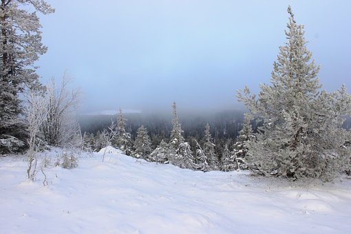 Snow, Fog, Winter, Cold, Frost, Trees, Leann, Forest