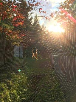 Spider's Web, Spider Web, Backlight, Autumnal Leaves