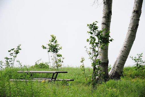 White Birch, Bench, Morning Fog