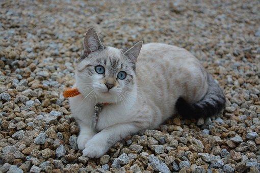 Cat, Kitten, Cat Eyes, Animal, Domestic Animal