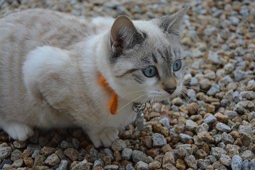 Cat, Kitten, Cat Hunt, Position Hunter, Domestic Animal