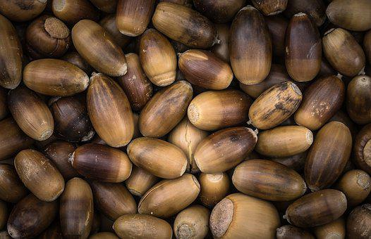 Acorn, Autumn, Fruit, Plants, Brown, Nuts, Food, Nature
