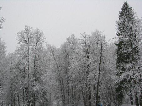 The First Snow, The Beginning Of Winter, Forest, Trees