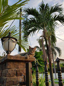 Cats, Lamp, Outdoor