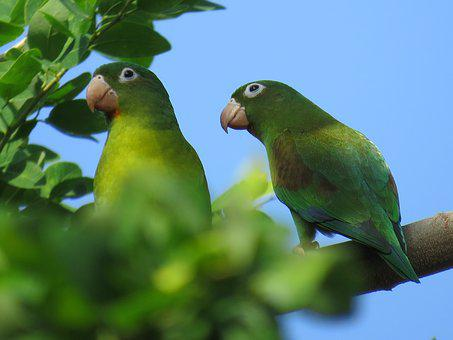 Parrot, Bird, Ave, Animal, Green, Nature, Peak