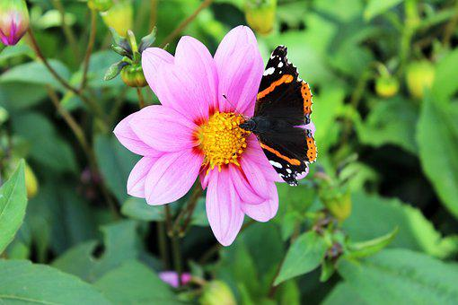 Natural, Butterfly, Summer, Flower, Insect, Flowers